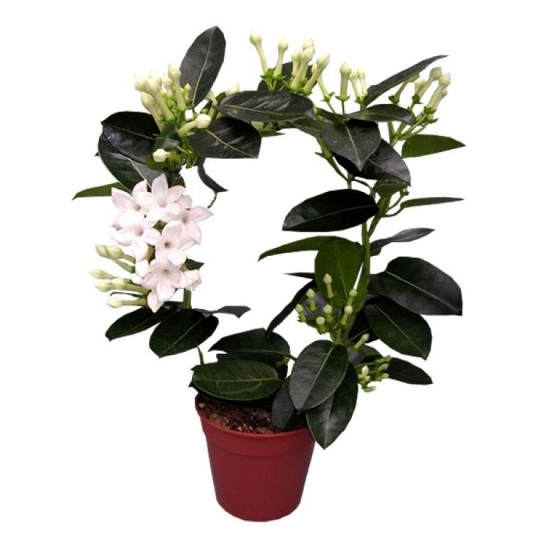 Цветы в дом купить харьков, для
